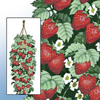Hanging Strawberry Garden